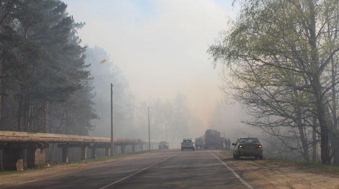 Около Котовска загорелась лесная подстилка
